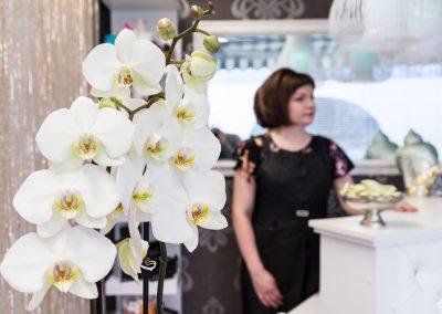 Hemmottelupuoti Orkidea